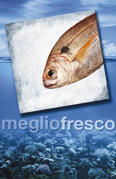 Pesce Roma Pezzogna