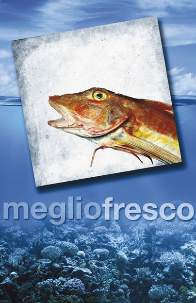 Pesce Roma Gallinella