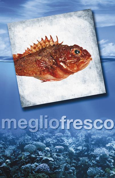 Pesce Roma Scorfano