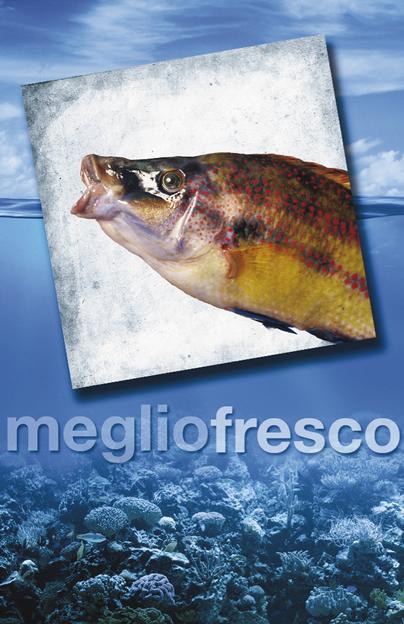 Pesce Roma Tordo