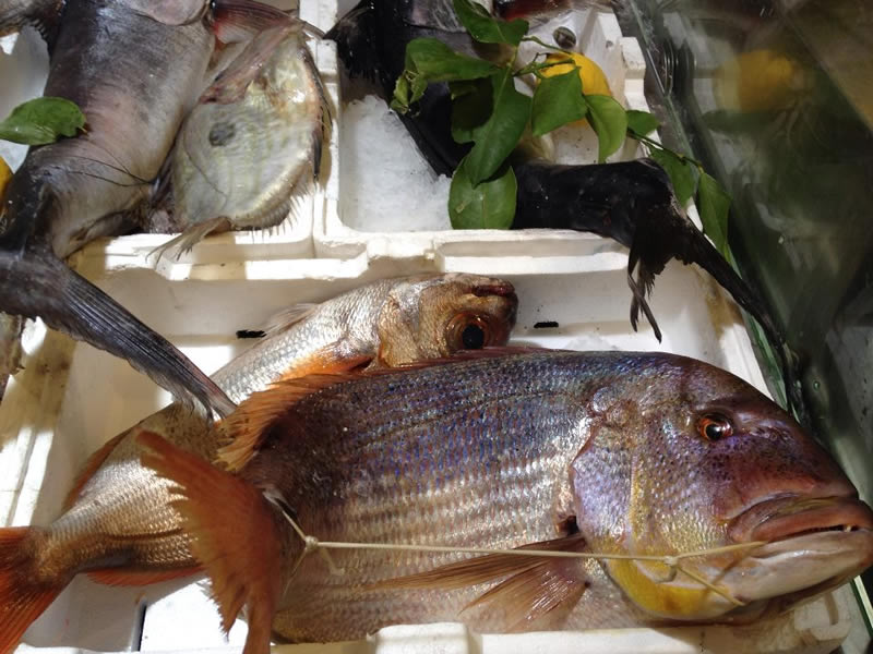 Pesce fresco a Roma